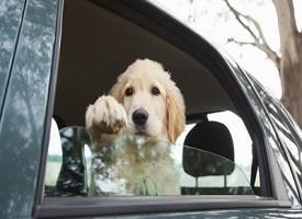 Video boom del ladro maldestro: Il cane gli fa da palo