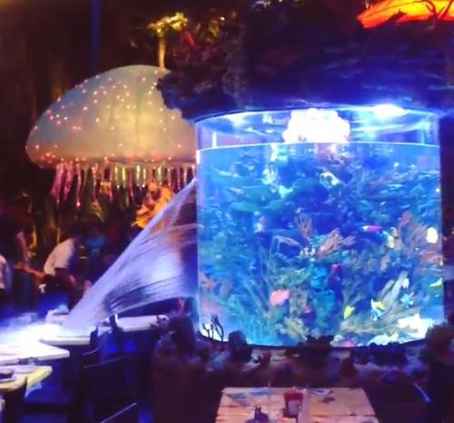 DisneyWorld_si_rompe_vasca_coi_pesci