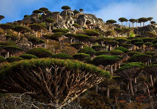 Socotra Yemen vegetazione