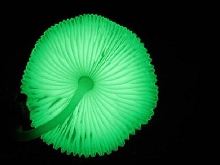fluorescenti
