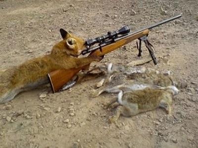 volpe cacciatore