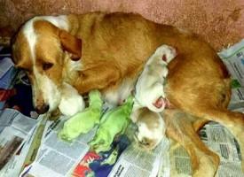 Spagna, la cucciolata inaspettata: i cagnolini sono nati verdi