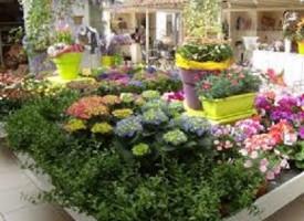 Perchè alcune piante fanno i fiori?
