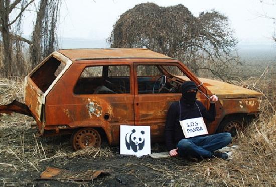 street art fra biancoshock panda