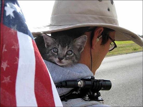 gatto-viaggiatore