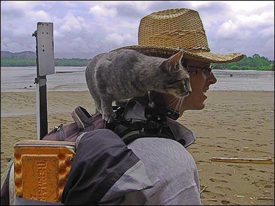 in-viaggio-con-il-gatto