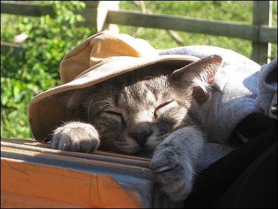 kitty-tour-mondo