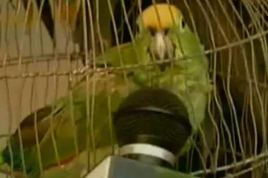 pappagallo-arrestato