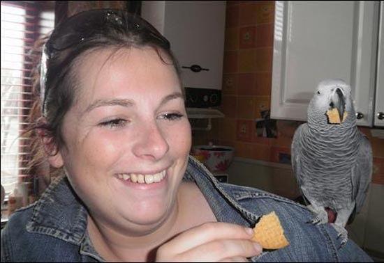 tradimento-scoperto-grazie-al-pappagallo