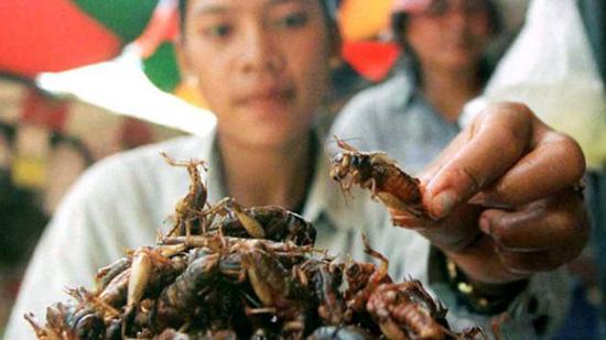 Antojeria la Popular cucina con insetti