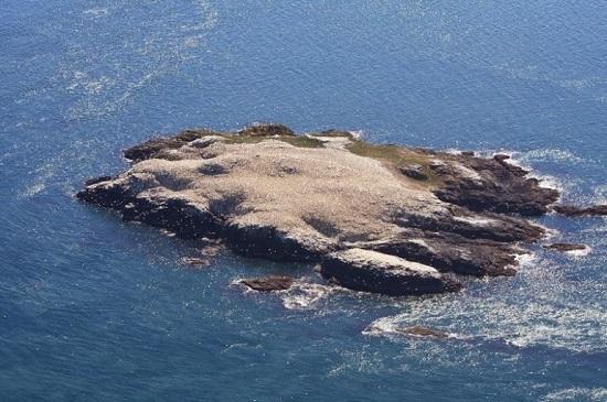 Grassholm isola galles