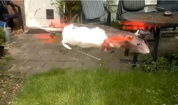 elicottero topolino