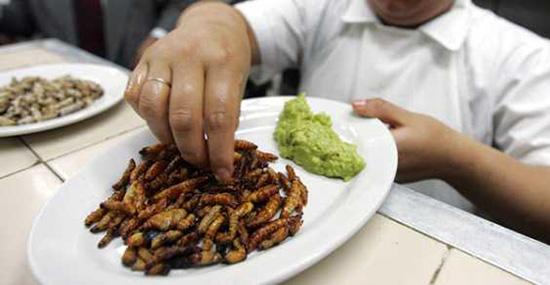 ristorante a base di insetti