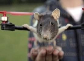 Ragazzo trasforma il suo topolino morto in un elicottero