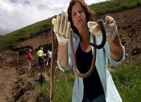 Il Gigante del Gippsaland il verme più grande e lungo del mondo