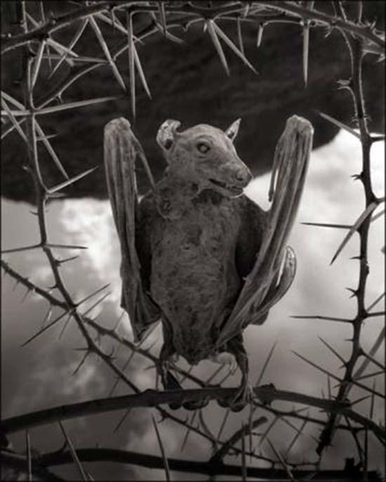 animali statue lago tanzania