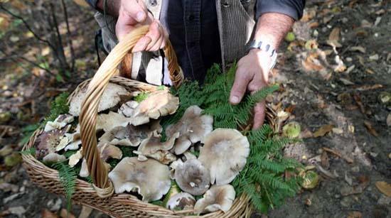 funghi da mangiare