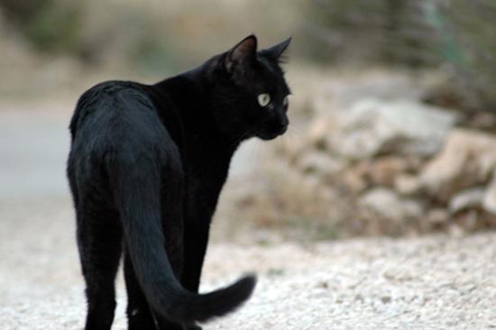 gatto nero attaversa la strada