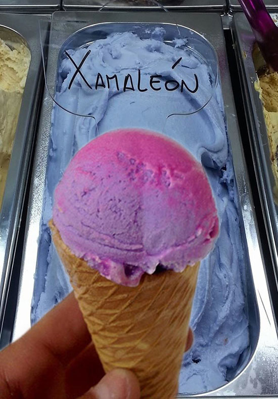 gelato xamaleon