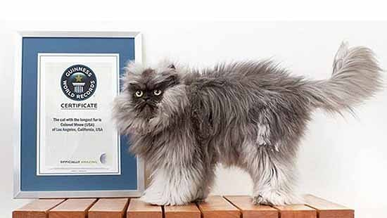guinness world record lunghezza pelo gatto
