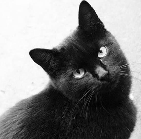 il gatto nero porta sfortuna