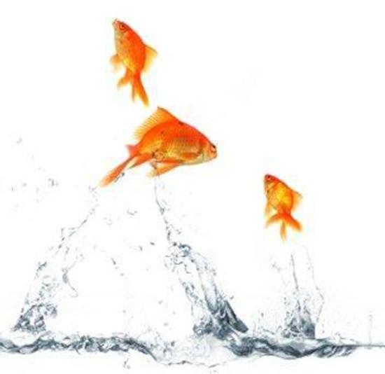 pesci fuori acquario