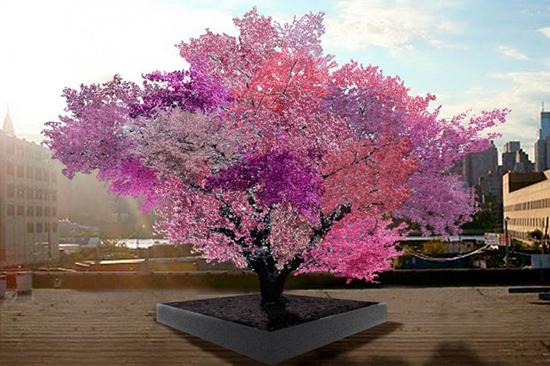 Sam Van Aken e il suo albero con innesti di 40 frutti