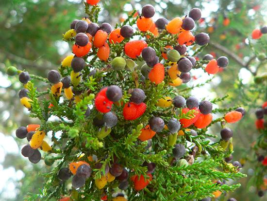 albero di frutta