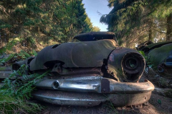 foresta cimitero auto