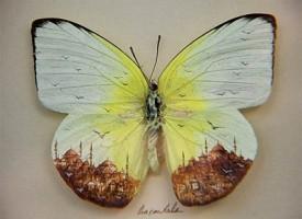 Hasan Kale l'artista che disegna microscopici panorami su frammenti di cibo