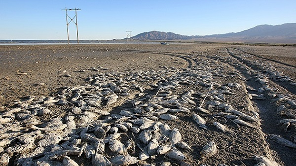 lago morto apocalisse