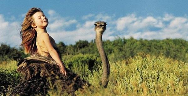 struzzo savana africa