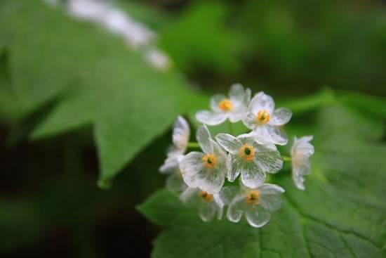 trasparente petali quando piove