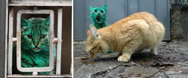 gatto colore verde