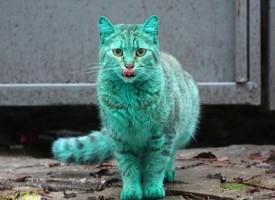 Il gatto verde che sta facendo impazzire gli abitanti di una città in Bulgaria