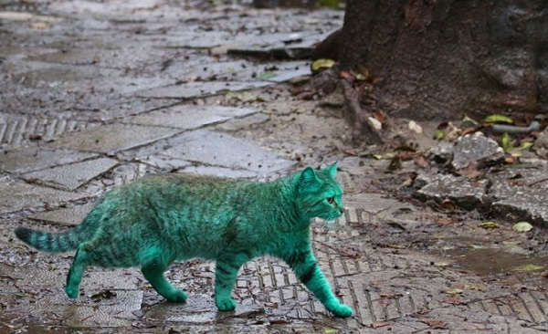 gatto vernice verde