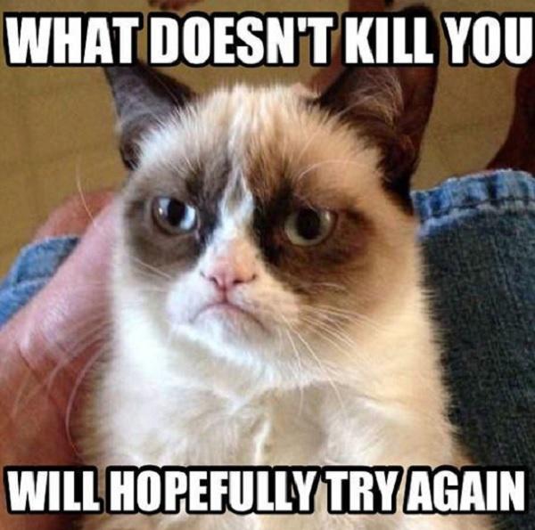 grumpy cat ricco