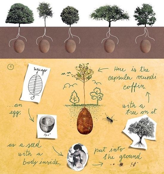defunti alimentano alberi