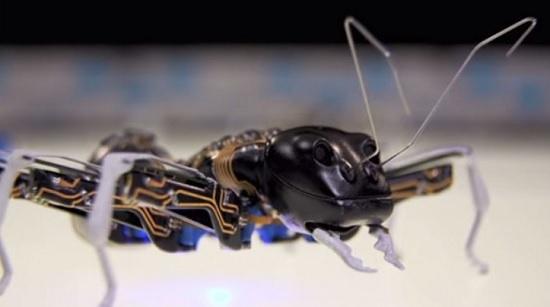 futuro formiche robot