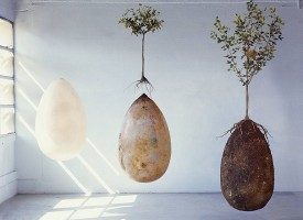 Addio alle bare: la sepoltura in gusci organici trasformerà i vostri cari in alberi