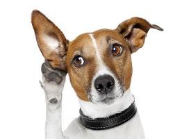 Se prendi in giro il tuo cane lui lo capisce