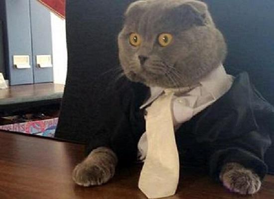 bossy gatto direttore