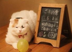 """Spopolano nel mondo i """"Cat cafè"""": le caffetterie dei gatti"""