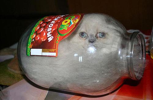 Gattini-nei-vasi-Bonsai-Kitten