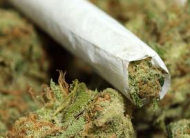 La marijuana (forse) fa bene al cervello