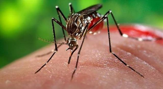 morso zanzara