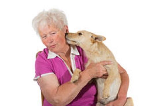 setticemia contagiata dal cane